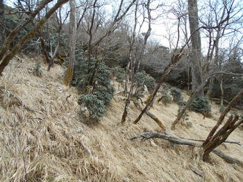 s_8-DSCN0734-下山時に鹿3匹に遭遇.jpg